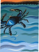 A blue crab in the water