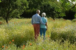 Older couple walking in field of flowers