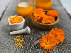 Various stages of processing calendula flowers