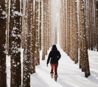Woman walking through snow covered forest, Omemee Ontario Canada