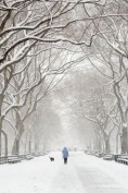Woman walking her dog during a snowstorm at The Mall in Central Park NYC