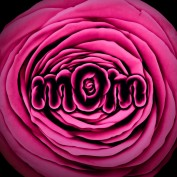 Mother mom flower with a pink rose with text shaped to represent motherhood and mothers day celebration and springtime love gree