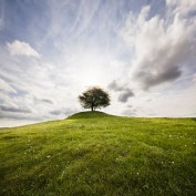 Lonely tree on a hill against the sun with a dramatic sky. Osterlen, Skane / Scania, Sweden.