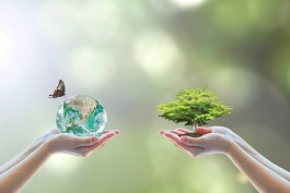World environment day and go green with csr concept with tree planting on volunteers' hand. Element of the image furnished by NASA